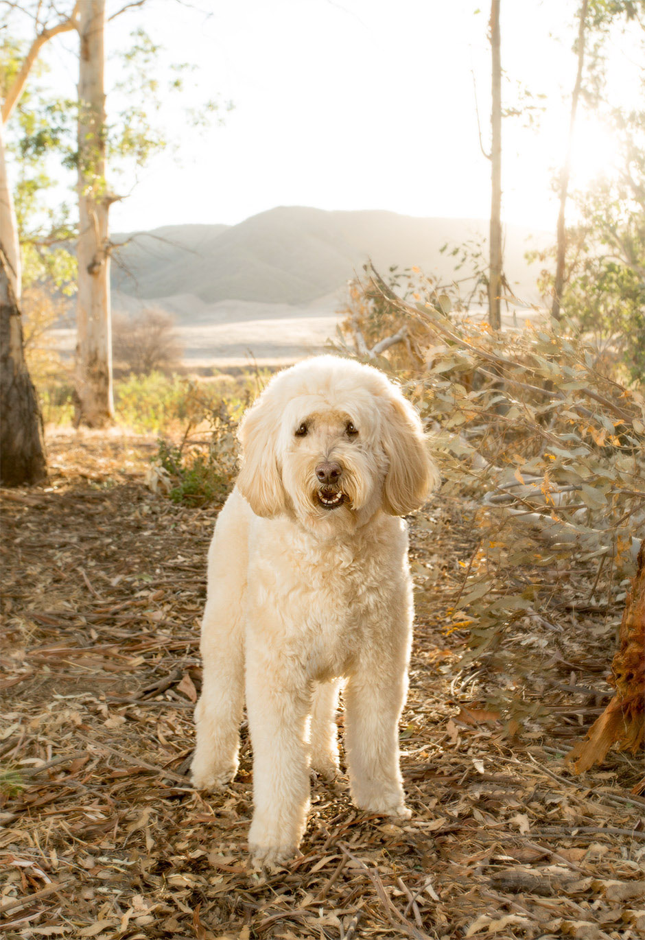 Banyan Pet Photography Portrait Service For Dogs Cats And